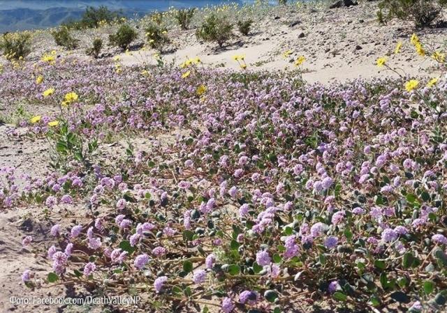 Долина смерти в цвету