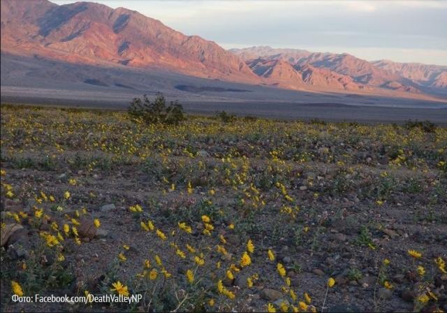 Долина смерти в цвету2
