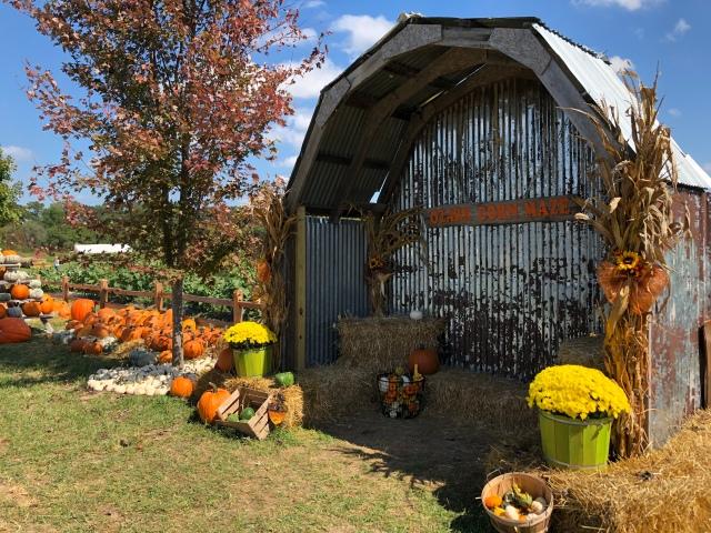 corn-maze-halloween